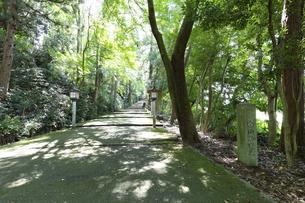 白山比咩神社の参詣道、表参道の写真素材 [FYI04942095]