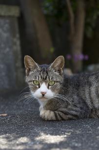 影で休む猫の写真素材 [FYI04942548]