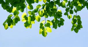 緑の小枝の写真素材 [FYI04942562]