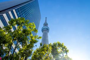 快晴の東京スカイツリーの写真素材 [FYI04942572]