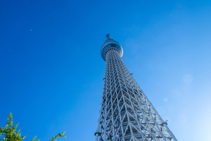 快晴の東京スカイツリーの写真素材 [FYI04942575]