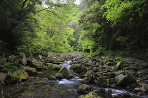天安河原の石積み 岩戸川 宮崎県の写真素材 [FYI04942949]
