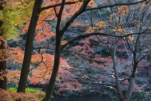 日本庭園の木々の写真素材 [FYI04943402]