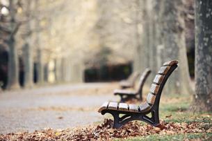 落葉のベンチの写真素材 [FYI04943406]