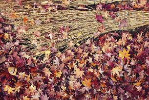 楓の落ち葉と竹箒の写真素材 [FYI04943461]