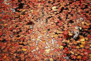池の落ち葉の写真素材 [FYI04943914]