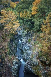 初冬の渓谷の写真素材 [FYI04944102]
