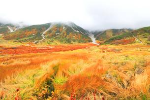 秋の立山連峰 真砂岳に雲と草紅葉の写真素材 [FYI04944145]