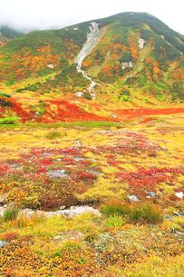 秋の立山連峰 真砂岳に雲と草紅葉の写真素材 [FYI04944146]