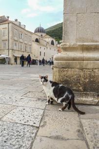 クロアチア、ドゥブロヴニクの町に佇むネコの写真素材 [FYI04944220]