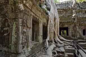 アンコール遺跡 タ・プロム寺院の写真素材 [FYI04944318]