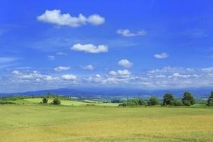北海道・美瑛町 牧場と青空に雲の写真素材 [FYI04944403]