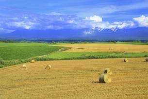 北海道・富良野 田園風景に白い雲の写真素材 [FYI04944405]