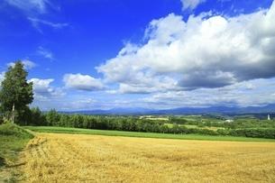 北海道・富良野 田園風景に白い雲の写真素材 [FYI04944407]