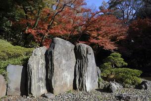小石川後楽園 屏風岩と紅葉の写真素材 [FYI04945057]