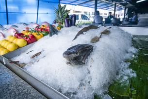 ポンティアナの市場の魚の写真素材 [FYI04945480]