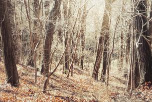 冬の落葉樹と山道の写真素材 [FYI04946237]