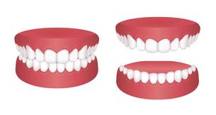 歯並び・歯列 イラストセット / きれいな歯並びのイラスト素材 [FYI04946523]