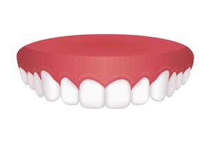 歯並び・歯列 イラスト / 上顎のイラスト素材 [FYI04946535]