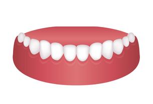 歯並び・歯列 イラスト / 下顎のイラスト素材 [FYI04946536]