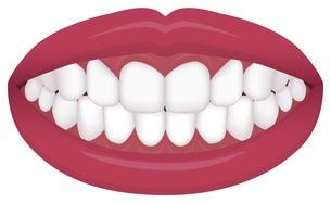 歯並び・歯列 イラスト / きれいな歯並びのイラスト素材 [FYI04946537]