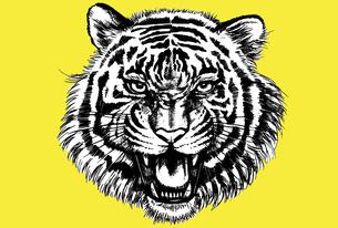 正面を向いて吠えている虎の顔の年賀状テンプレートのイラスト素材 [FYI04947291]