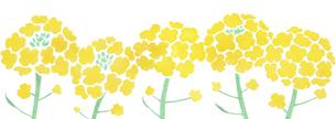 つらなる菜の花のイラスト素材 [FYI04947372]