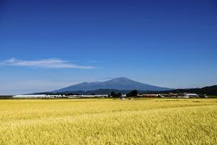 稲穂と鳥海山の写真素材 [FYI04947459]