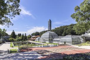 温室前館とスカイタワーを見る東山植物園洋風庭園風景の写真素材 [FYI04947473]