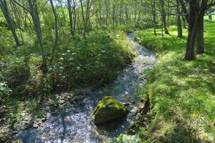 森と小川の写真素材 [FYI04948595]