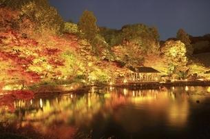 東山植物園 紅葉ライトアップの写真素材 [FYI04948696]