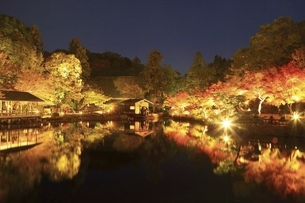 東山植物園 紅葉ライトアップの写真素材 [FYI04948697]