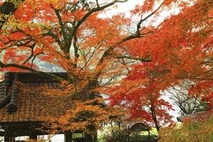 大分県 富貴寺の紅葉の写真素材 [FYI04948703]
