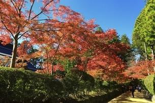 高野山の紅葉の写真素材 [FYI04948707]