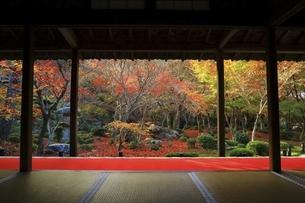 京都・圓光寺 十牛之庭の紅葉の写真素材 [FYI04948738]