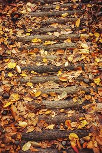 紅葉の落ち葉が積もる石段の写真素材 [FYI04948997]