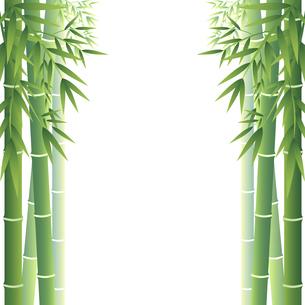 シンプルな竹のフレーム、ベクター素材のイラスト素材 [FYI04949081]