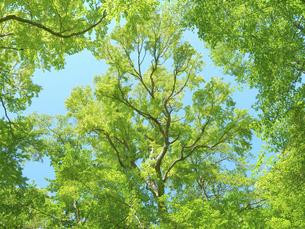 森の写真素材 [FYI04949234]