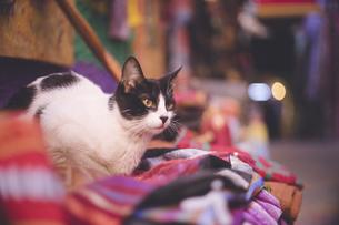 モロッコの人気観光地フェズ旧市街おみやげ屋さんの商品に座る猫の写真素材 [FYI04949280]