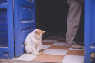 モロッコの人気観光地エッサウィラ旧市街の猫の写真素材 [FYI04949287]