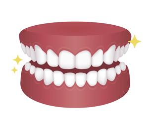 歯列矯正・歯の矯正 イラスト / 整った歯並びのイラスト素材 [FYI04950064]