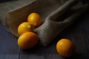 レモンの写真素材 [FYI04950359]