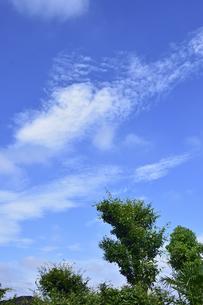 箒に似た木と青空と流れるような白い雲の写真素材 [FYI04951091]