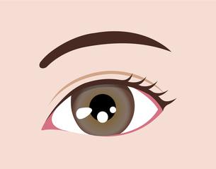 目の虹彩の色・カラー (人種・カラーコンタクト) / アンバーのイラスト素材 [FYI04951603]