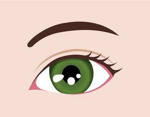 目の虹彩の色・カラー (人種・カラーコンタクト) / グリーンのイラスト素材 [FYI04951604]