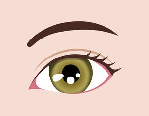 目の虹彩の色・カラー (人種・カラーコンタクト) / ヘーゼルのイラスト素材 [FYI04951605]