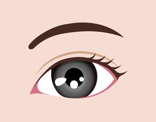 目の虹彩の色・カラー (人種・カラーコンタクト) / グレーのイラスト素材 [FYI04951606]