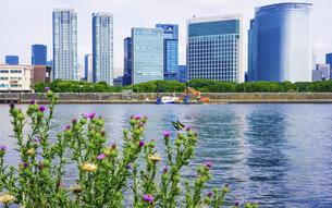 アオスジアゲハ 豊海水産埠頭から都心のビル群(汐留) の写真素材 [FYI04951886]