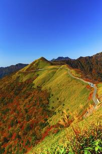 秋の瓶ヶ森林道の写真素材 [FYI04951943]