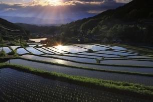 明日香村の棚田と夕日の写真素材 [FYI04952484]